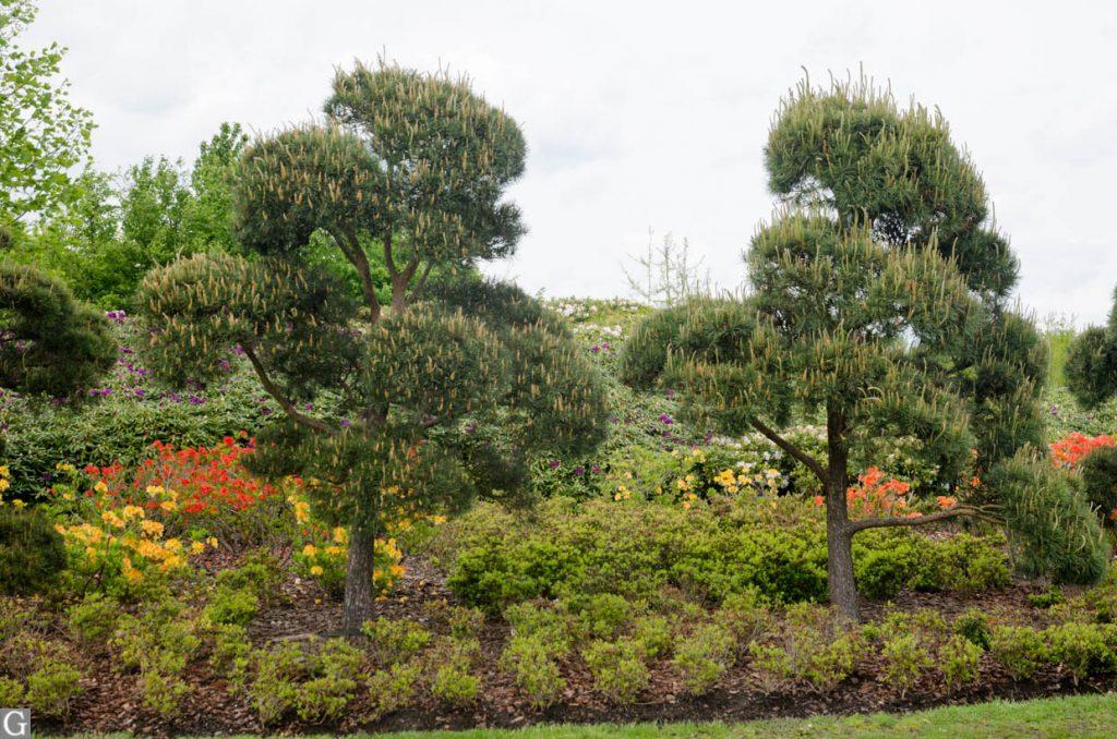 Japanse tuin, Maximapark
