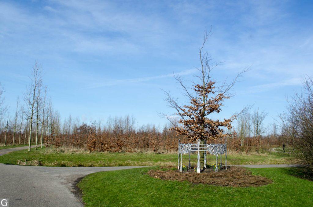 Koningsboom Maximapark